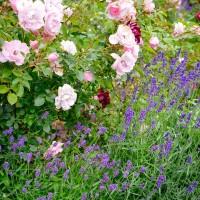 Växtkomposition – Timmersdala